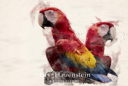 Scarlet Macaw Digital Watercolor Illustration