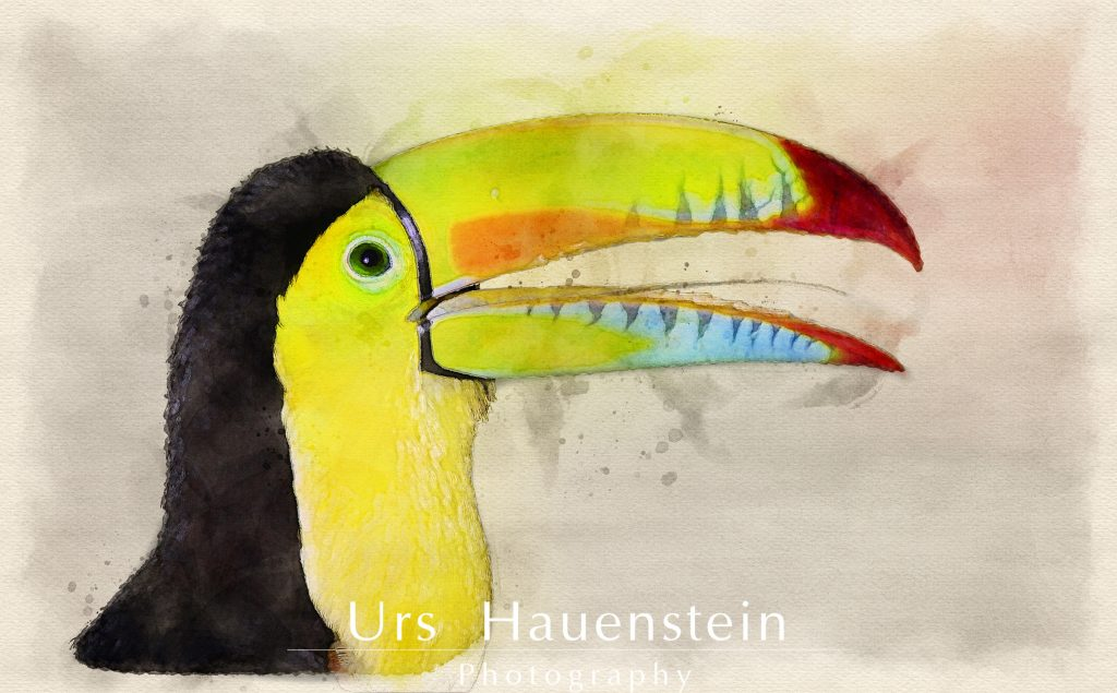 Rainbow billed toucan watercolor illustration
