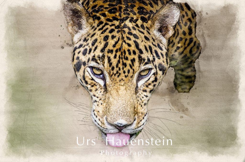 Jaguar watercolor illustration